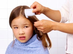 Dicas para evitar os piolhos com alecrim e lavanda