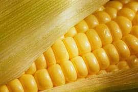 Propriedades nutritivas do milho