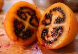 Benefícios do tomate de árvore