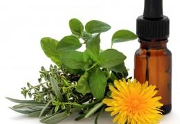 Conheça a terapia floral