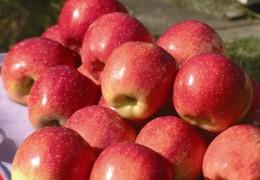 Benefícios da maça para a saúde