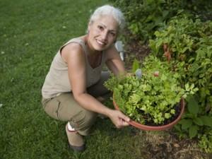 Como cultivar plantas medicinais em casa?