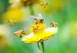 Estimule o desejo sexual com pólen de abelha