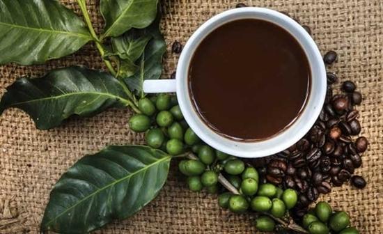 Emagreça com o café verde-2