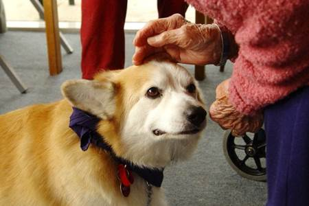 terapia com cães 1
