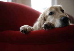 Terapia com cães contra a depressão