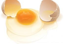 Clara de ovo e seus benefícios