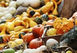 Alimentos ideais para um outono em perfeita saúde