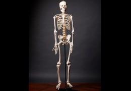Dez curiosidades sobre os ossos que você não sabia
