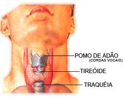 Tireóide: Hipertireoidismo e hipotireoidismo