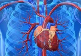 Dicas para prevenção de doenças cardiovasculares