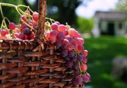 Uvas: Ideal para nos proteger da radiação solar no verão