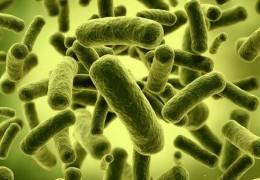 O poder dos probióticos para a nossa saúde