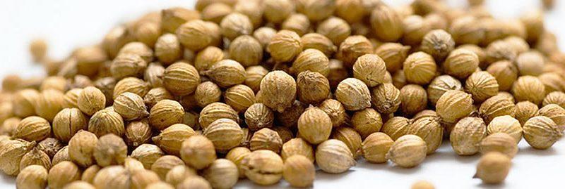 9 efeitos colaterais das sementes de coentro