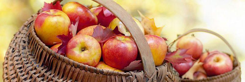 Razões para comer uma maçã por dia