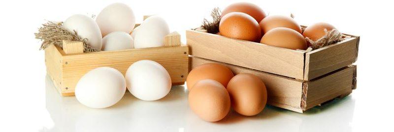 Os benefícios dos ovos para nossa saúde