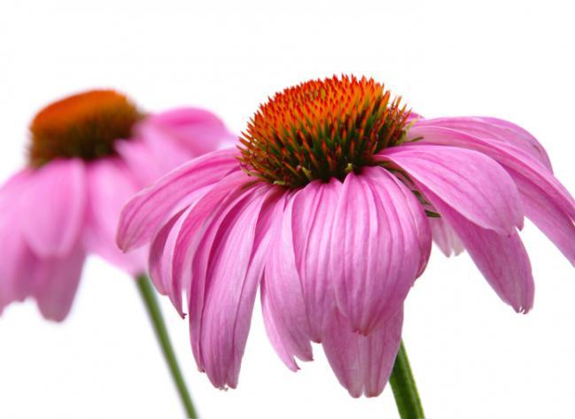 plantas medicinais 2