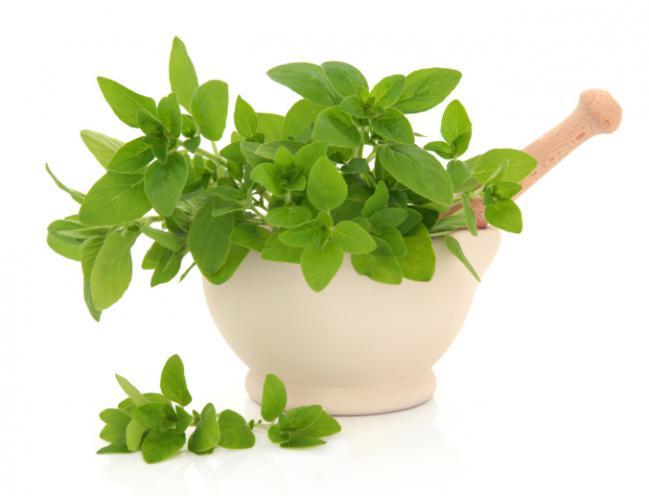 plantas medicinais 3
