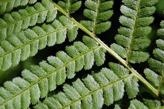 plantas medicinais 5