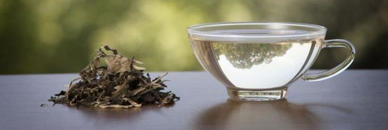 Benefícios do chá branco para a saúde e suas contra-indicações