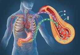 Ervas medicinais para desintoxicar o pâncreas