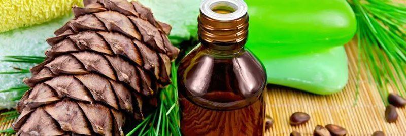 Usos e benefícios do óleo essencial de pinho para a saúde