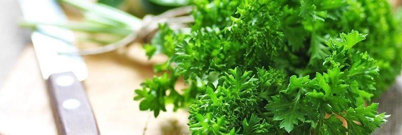 15 benefícios da salsa para a nossa saúde