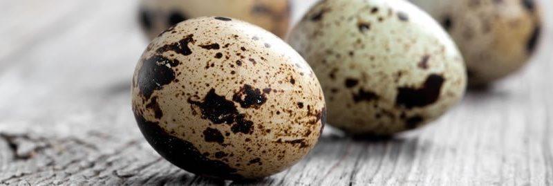 13 Benefícios do ovo de codorna para a saúde