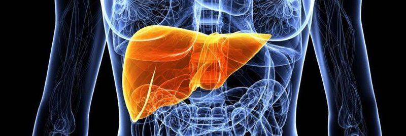 Tratamentos para eliminar a gordura no fígado
