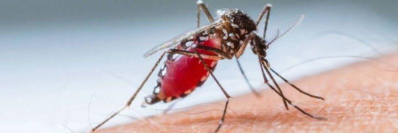 Zika Vírus: sintomas, tratamentos e prevenção