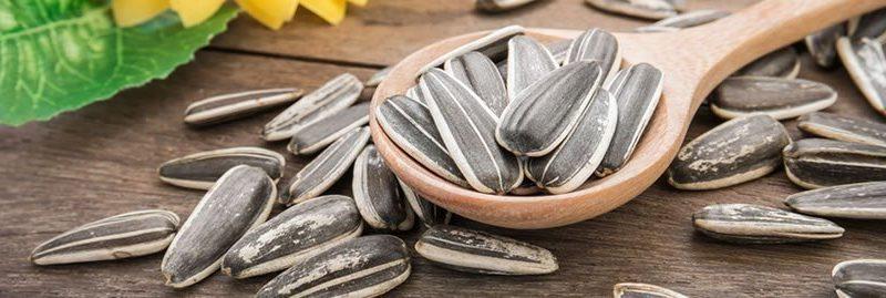 8 benefícios da semente de girassol à saúde