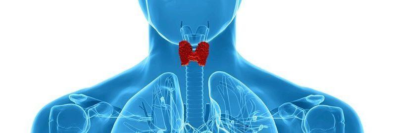 4 remédios caseiros para tratar o hipertireoidismo