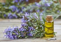 Usos e propriedades do óleo de alecrim