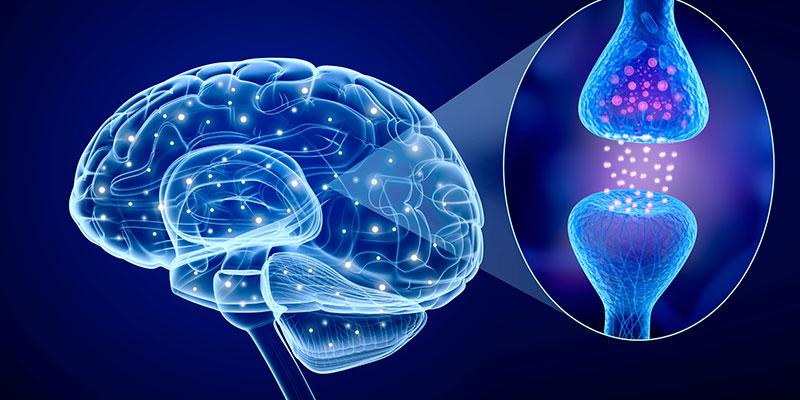 Resultado de imagem para aumenta a capacidade mental