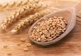 Propriedades e benefícios do germe de trigo