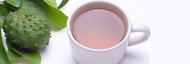 Benefícios do milagroso chá de folha de graviola para a saúde