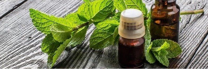 10 usos e benefícios do óleo essencial de hortelã pimenta