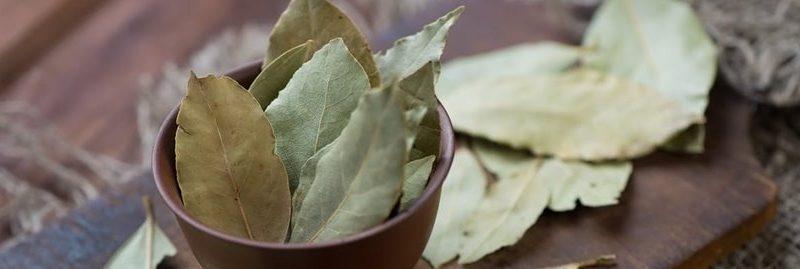 12 incríveis benefícios da folha de louro para a saúde