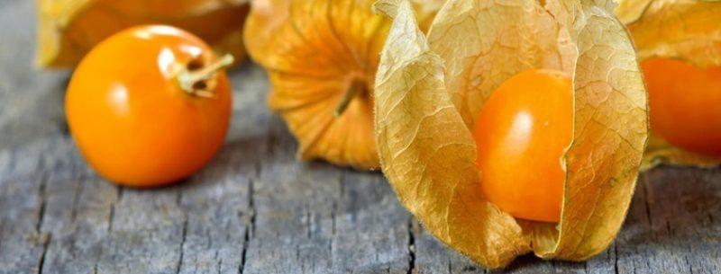 Os incríveis benefícios da physalis para a saúde e receitas com a fruta