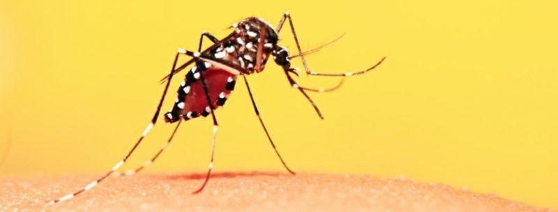 Febre amarela: o que é, quais seus sintomas e tudo sobre a vacina