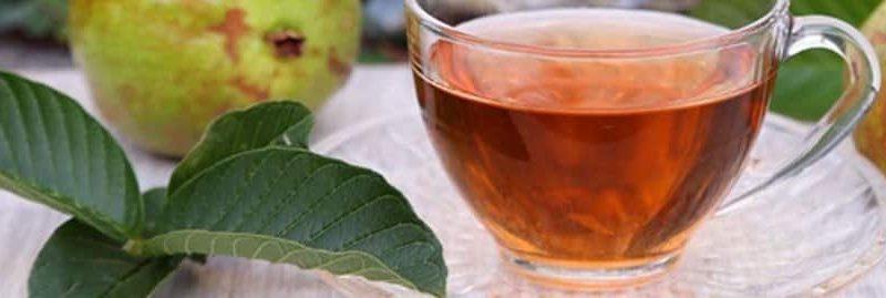 12 incríveis benefícios do chá de folha de goiaba para saúde